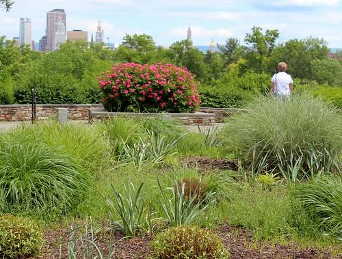 park flowers overlook hartfordct connnecticut elizabethpark ronpersan elizabethsunriseoveerlook