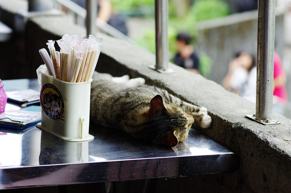 猴硐貓村有感  (圖多唷)
