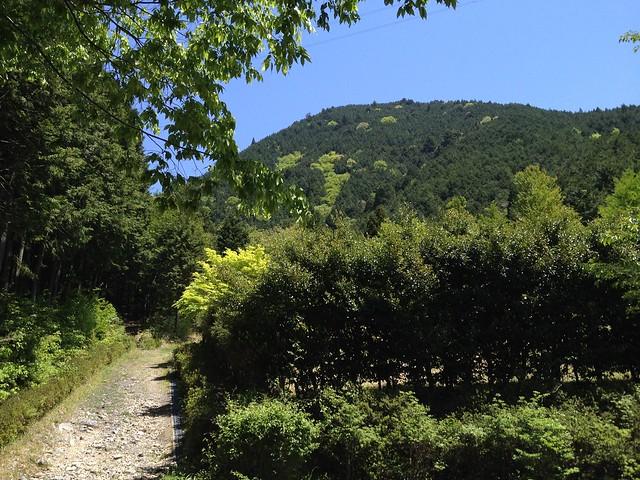 登山口から望む高賀山