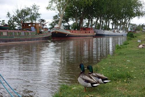 Canal du Midi at le Somail