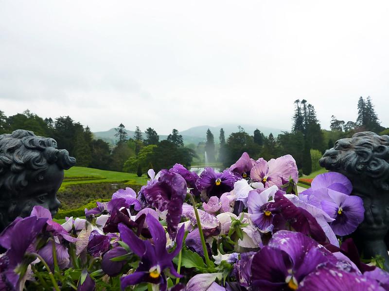 pot-plant-view