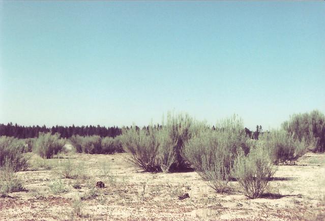 laguna hanson 2013 020