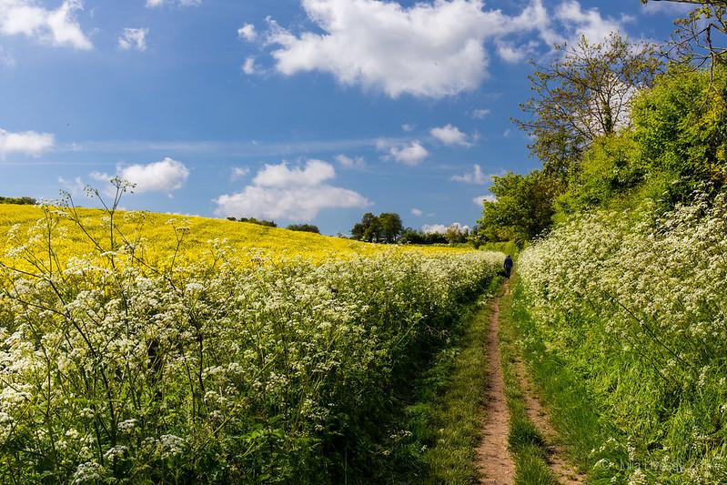 Path to Badbury Rings