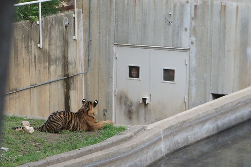 Tiger and Zookeeper