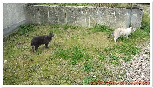 Chowan et Ayden 01-06-2014_001