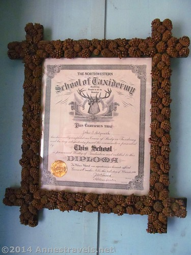 Taxidermy Diploma at the Holzwarth Historic Site, Rocky Mountain National Park, Colorado