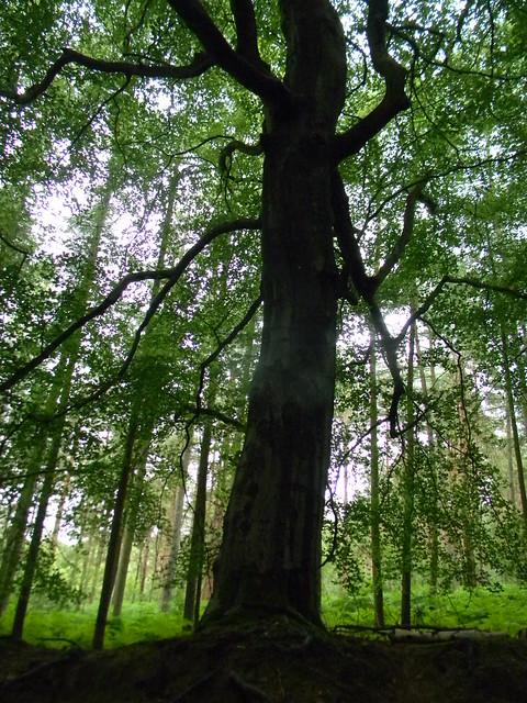 Nice tree 1