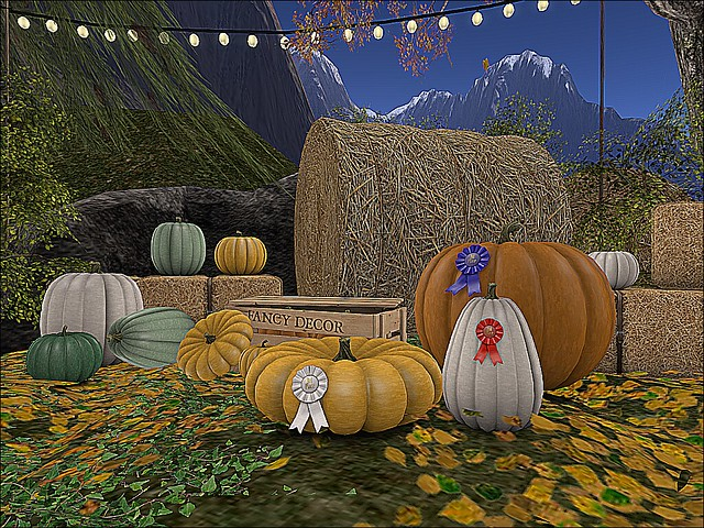 A Study In Autumn - The Pumpkin Patch - Prized Pumpkins