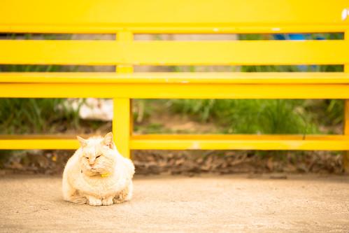railroad station japan cat bench railway 猫 駅 千葉 鉄道 ベンチ ローカル線 localline 銚子電鉄 無人駅