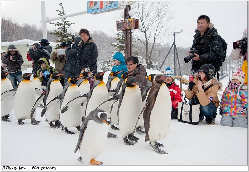 Day5 - 旭山動物園 - 企鵝散步-64