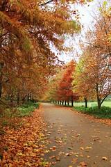 Autumn Days by biankahoff