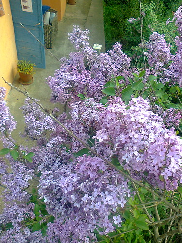 Αυλή με λουλούδια by Dina Koumpouli