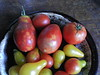 Small varieties of tomatoes