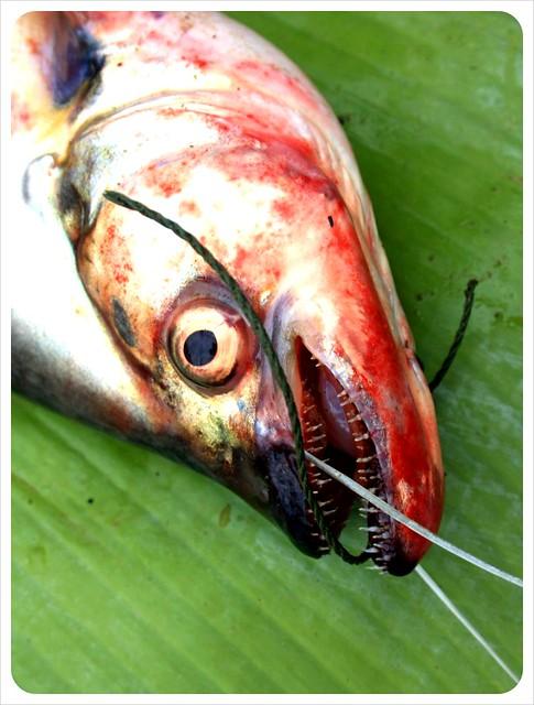 luang prabang morning market fish head