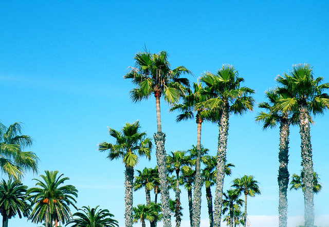 Coronado Beach Palm Trees