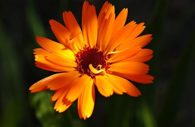 In my garden Explored., Nikon D1X, AF Micro-Nikkor 60mm f/2.8D