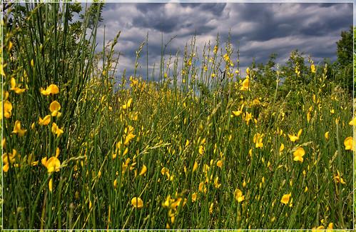 fleur paca provence luberon vaucluse provencealpescôtedazur