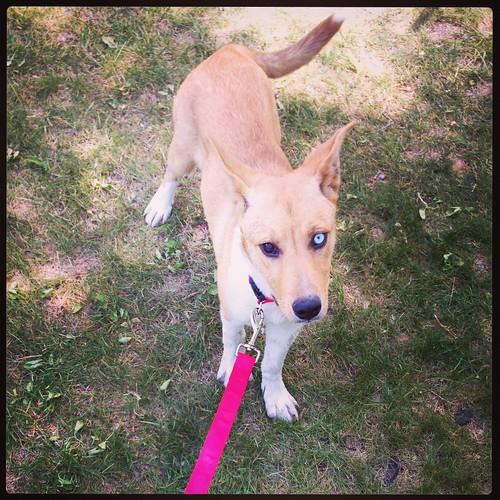 Meet Buffy!