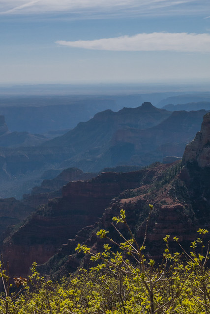 Grand Canyon -Kaibab Plateau