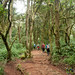 Walking Through Rainforest - Mt. Kilimanjaro, Tanzania