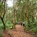 Walking Through Rainforest - Mt. Kilimanjaro, Tanzania