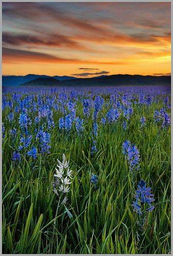 Sunrise on the Camas Prairie