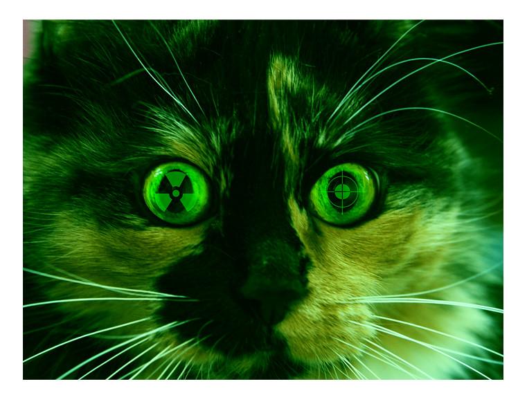Зеленая виртуальная кошка 6908191972_472608e8ef_b