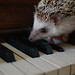 Acorn playing the piano by Justin Snow
