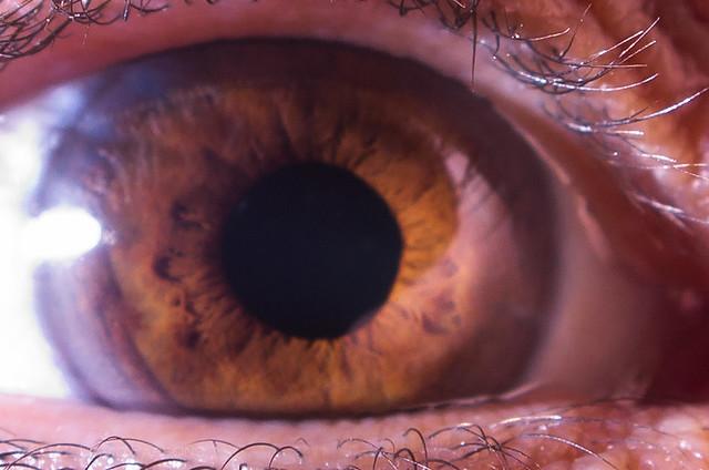 Eye, closeup