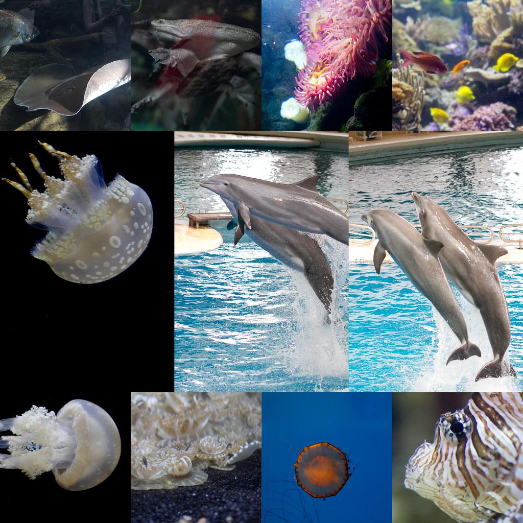 aquarium april 2
