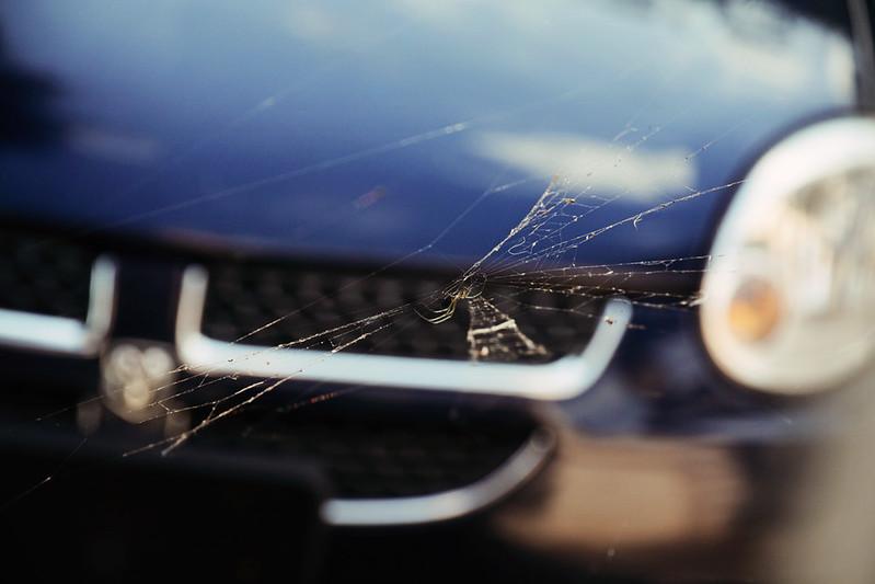 driveway spider 1