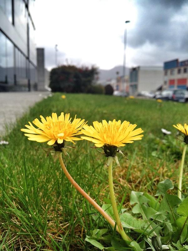 Flores de polígono