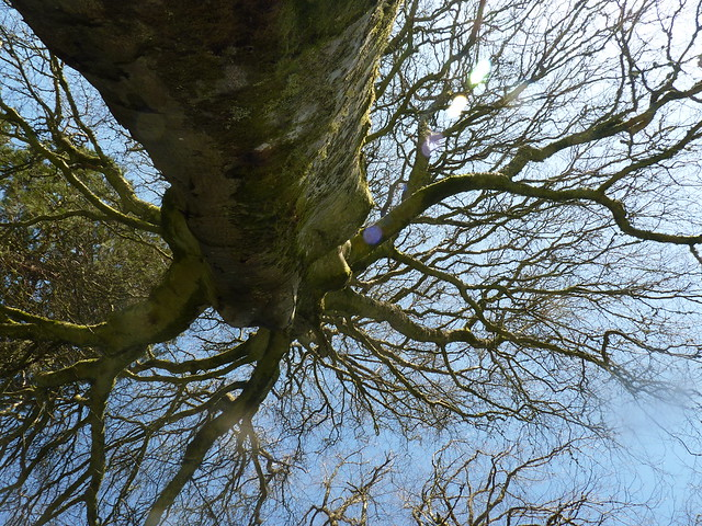 Lunchtime tree view