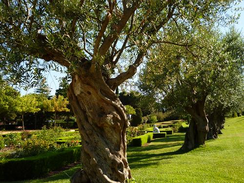 Gardens in Parc de Cervantes