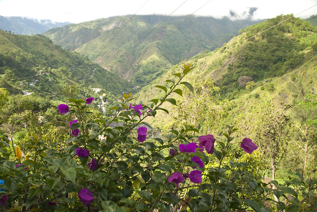 Mountain Flowers - Baguio City, Philippines