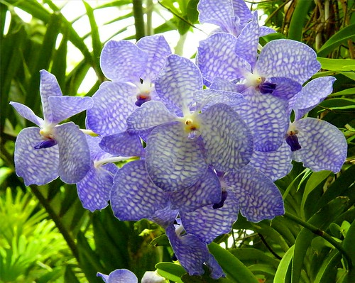 Orchids in Purple