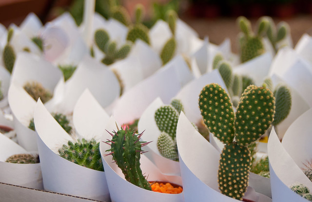 Cactus World News Urban Beaches
