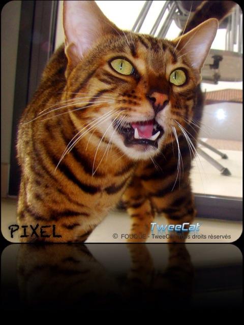 Mon magnifique Pixel