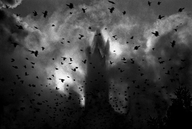 9-11, Flock of birds flies through debris, as the Woolworth Building is shrouded following the collapse of tower 7, by Antonio Turok