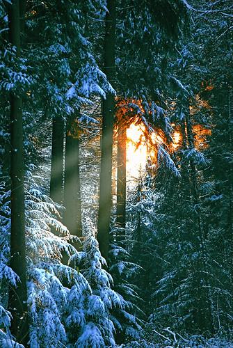 wood trees winter sunset snow tree nikon bravo hiver neige foret arbre foretdesoignes sonianforest twitter jezuseik d40x notredameaubois vanagram