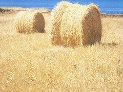 prairie, agriculture, straw, hay, field, plant, harvest, grassland,