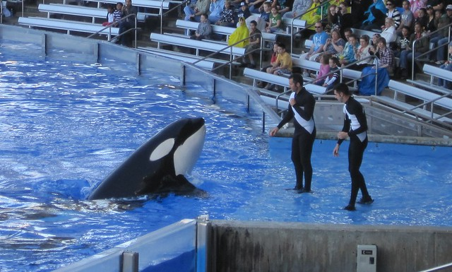 whales in sea world