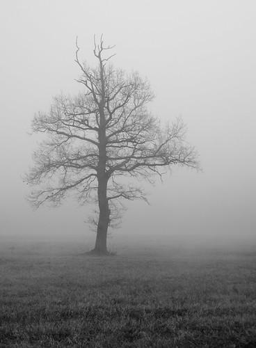 Il grigio imperat... by Claudio61 una foto ferma un ricordo nel tempo
