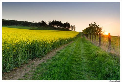 sunset landscape deutschland thüringen sonnenuntergang landschaft raps hitech feldweg frühling eichsfeld ndgrad 09reverse tamron1024mmf3545spdiiildaslif bodenrodewesthausen