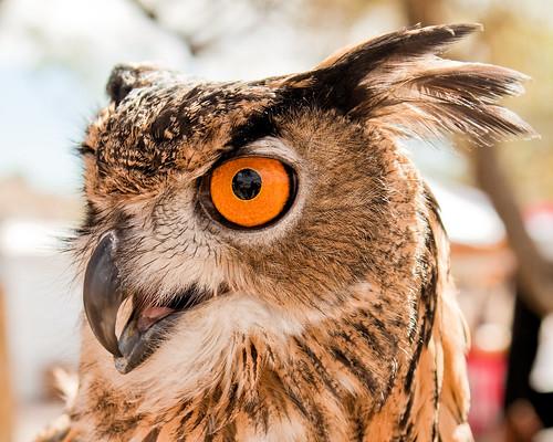 arizona phoenix festival az fairy owl fairies goodyear faerie thewonderfulworldofbirds