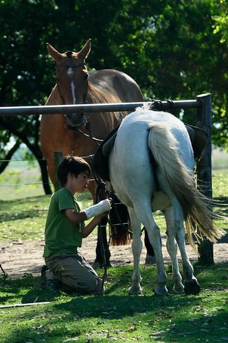 Autor: Wild.Horses.