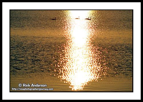 lake nature water birds wildlife birding lakes northcarolina swans wildliferefuge coastalnc coastalnorthcarolina lakemattamuskeet mattamuskeetnationalwildliferefuge visitnc