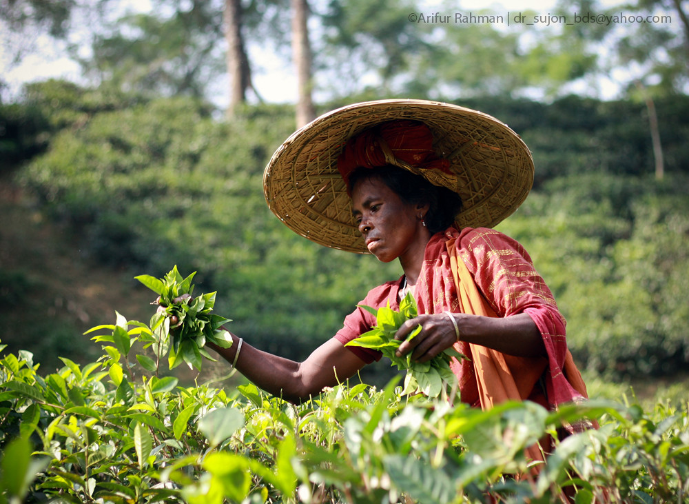 Tea Workers of Bangladesh 2