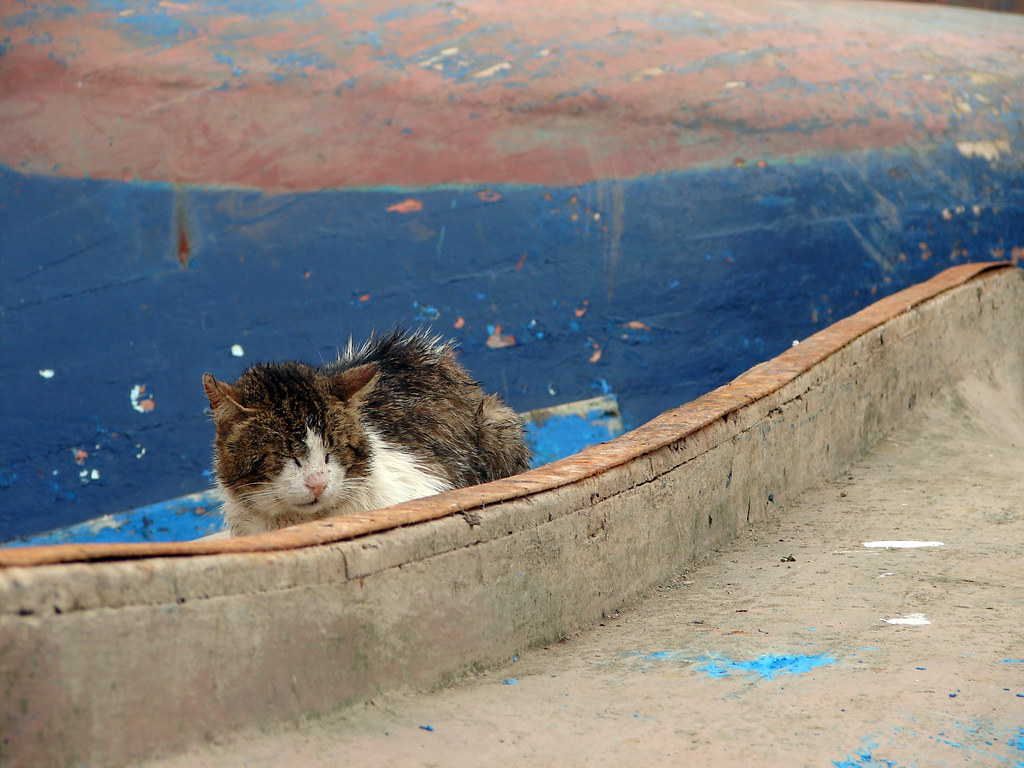Stray Cat On Upturned Boat, Essaouira