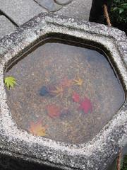 Autumn leaf color at Touhuku-ji temple in Kyoto, Japan: 紅葉、東福寺、京都